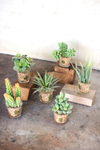 Set of 6 | Succulents In Glass Containers