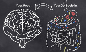 Connection between gut health and mood