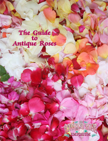 Guide To Antique Roses