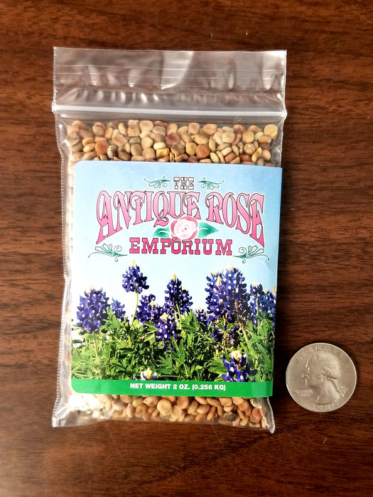 Bluebonnet Seed (2oz)