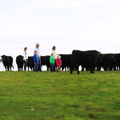 Farmers on pasture raising cattle.