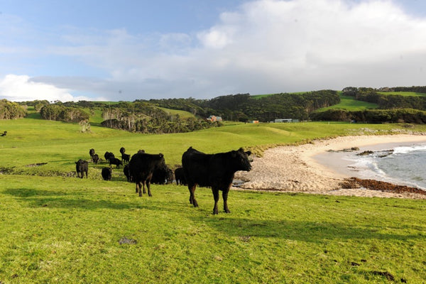 Cattle grazing near a lake
