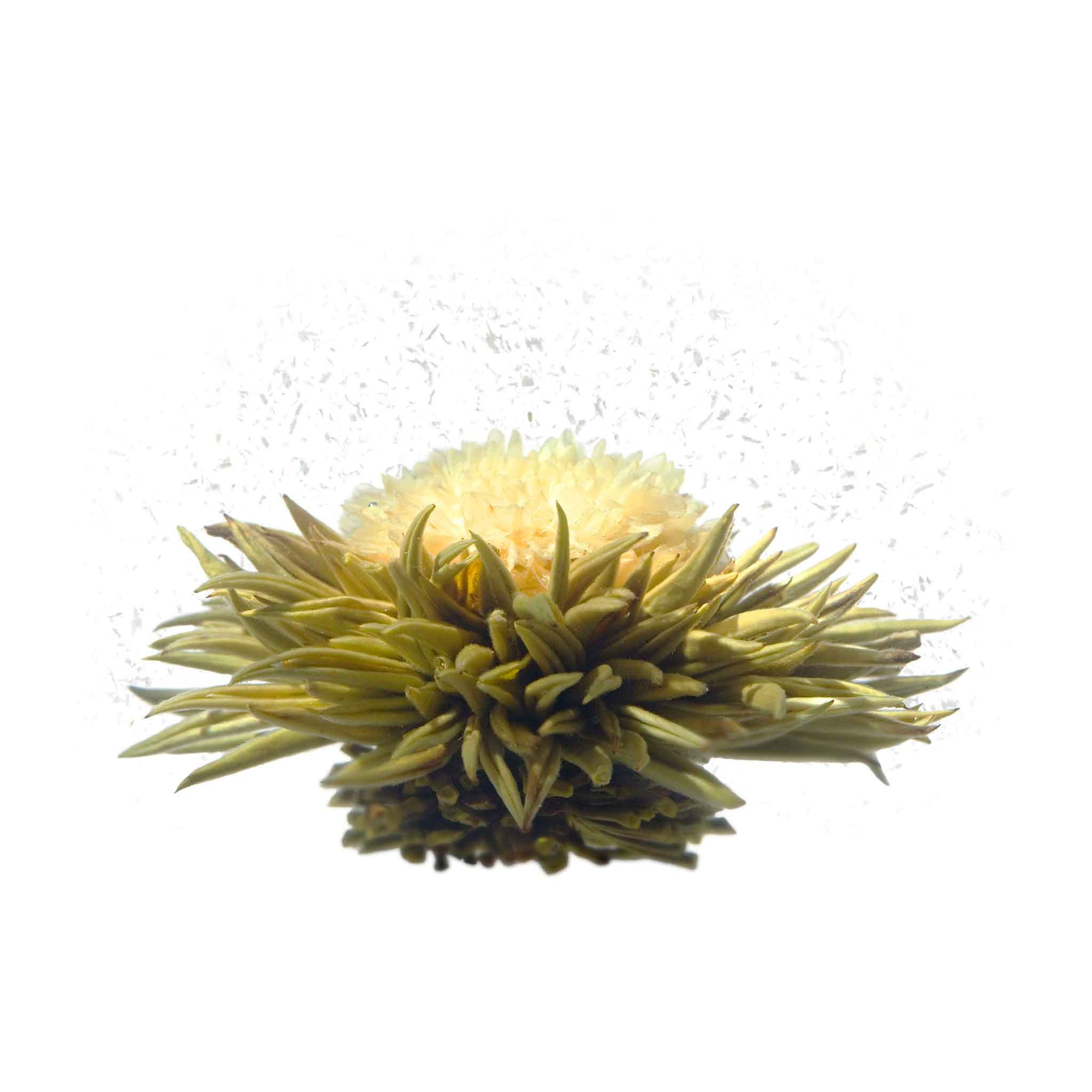 teaposy let it snow blooming tea, with chrysanthemum flower and coconut flakes