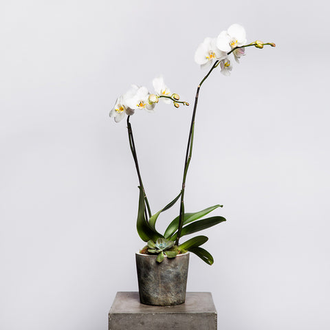 Small Orchid Garden ($65)