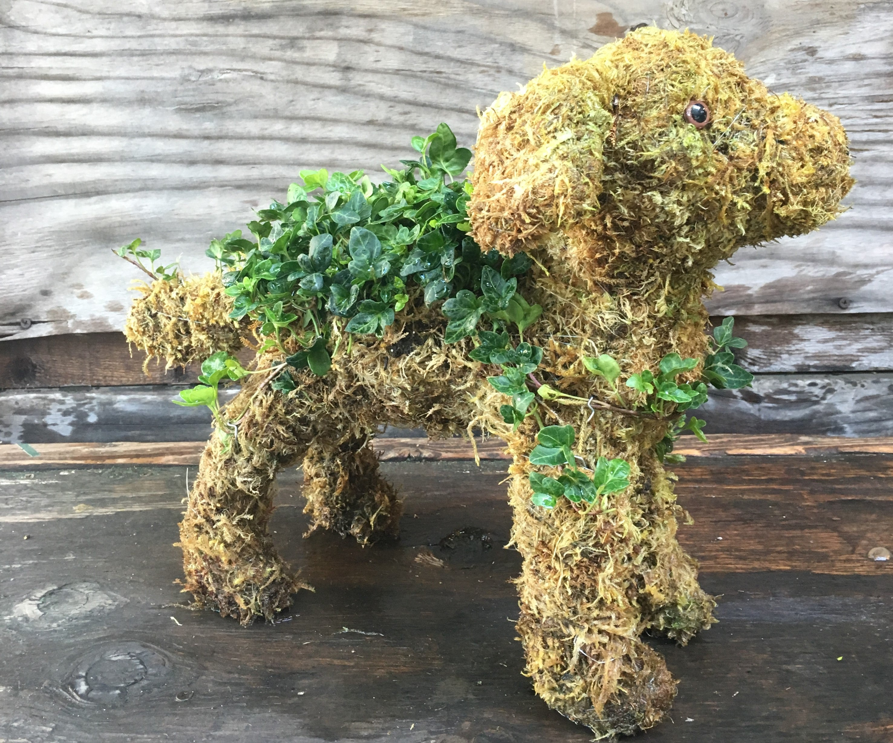 Dog Topiary