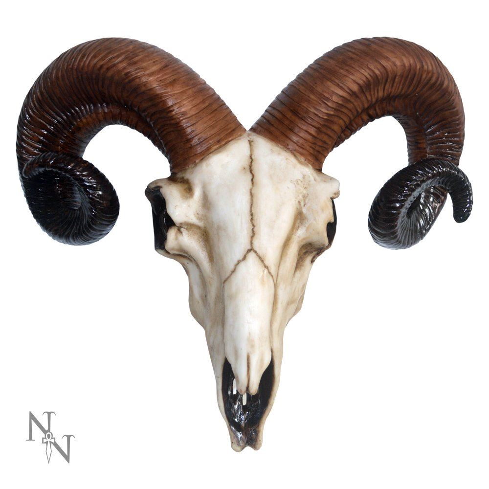 Nemesis Now Realistic Wall Mounted Rams Skull