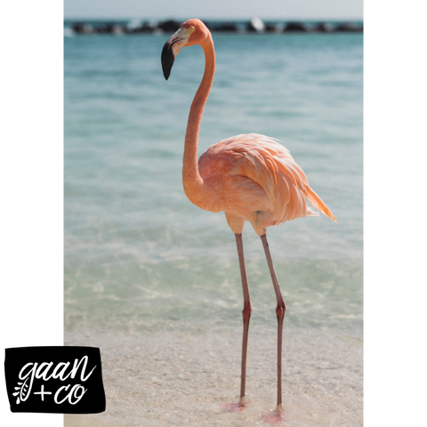 flamingo, beach
