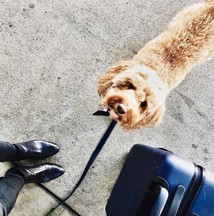Traveling Internationally With Your Dog