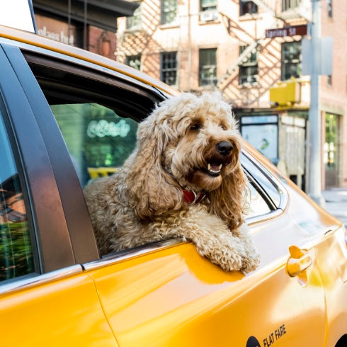 Dog Friendly Guide to Downtown NYC