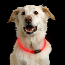 nite_ize_NiteHowl_LED_Safety_Necklace_Red_dog_S71AA2G3PMVY.png