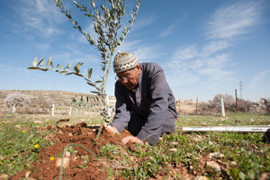 Plant an Olive Tree - The Date Parlour
