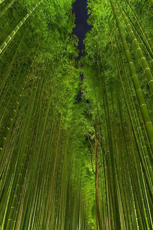About the Bamboo