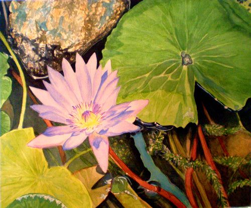 Water Lily SOLD