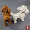 Image of Poodles!