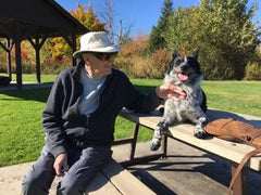A border collie dog who has done Vancouver dog training sits on a park picnic table and brings joy to a smiling senior man.