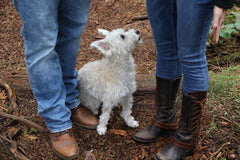 A small white dog gazes up at his owners and is happy to do Vancouver dog training