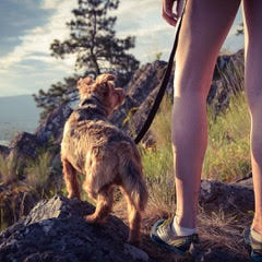 Dog training classes Vancouver