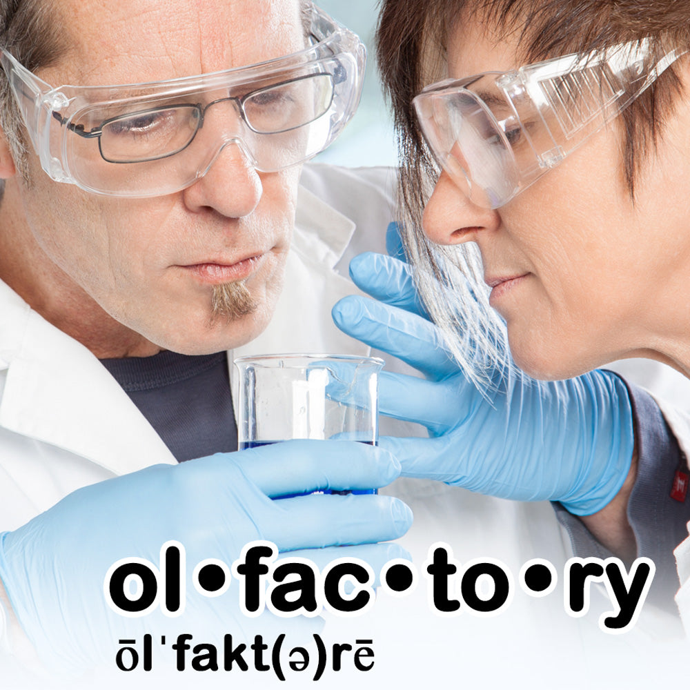 What is Olfactory and The Olfactory System