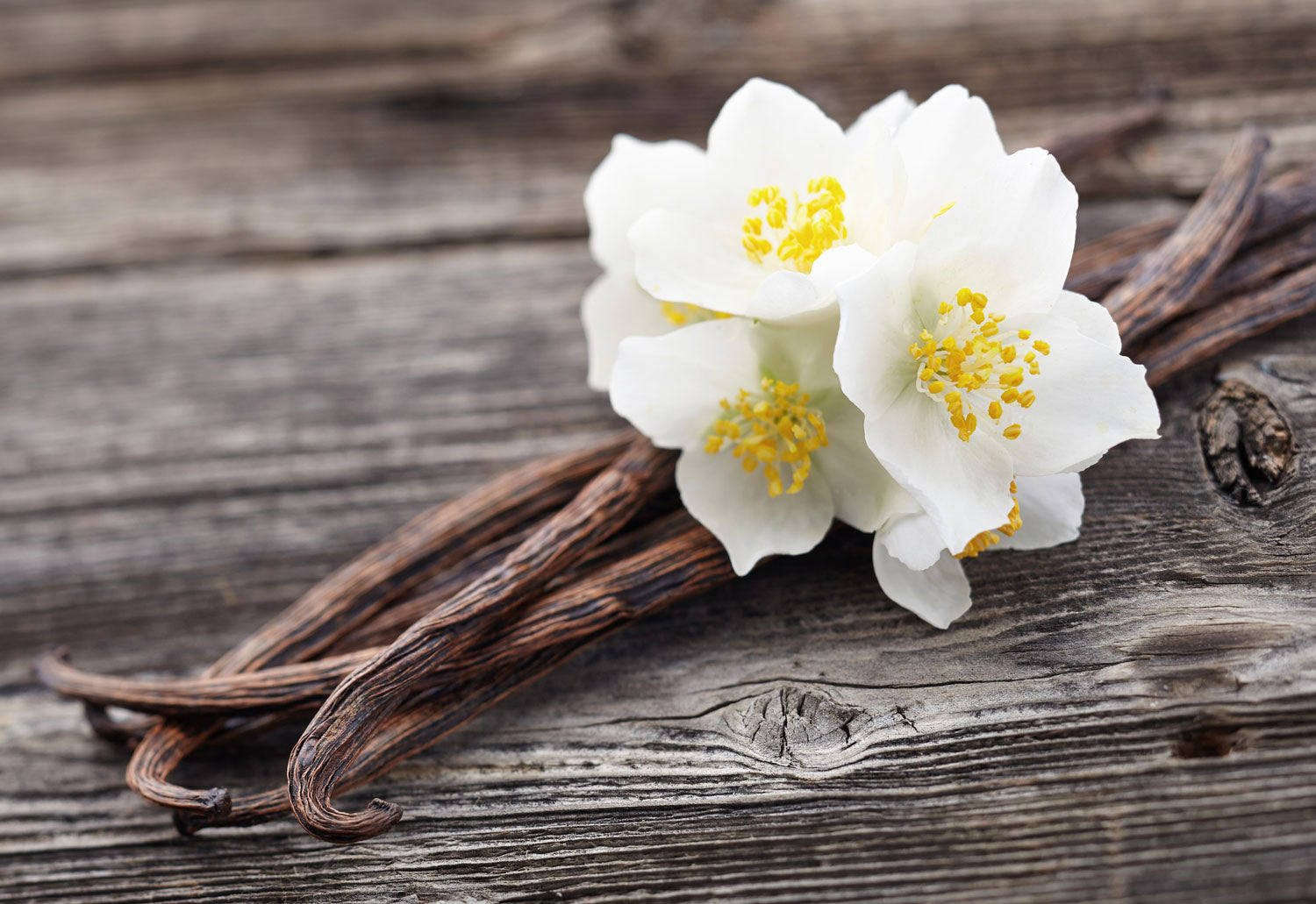 What's The Best Vanilla Perfume?
