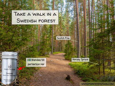 Forester John image of Sweden essential oil forest. Take a walk down forest path.