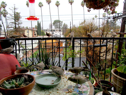 The Balcony Garden on Youtube