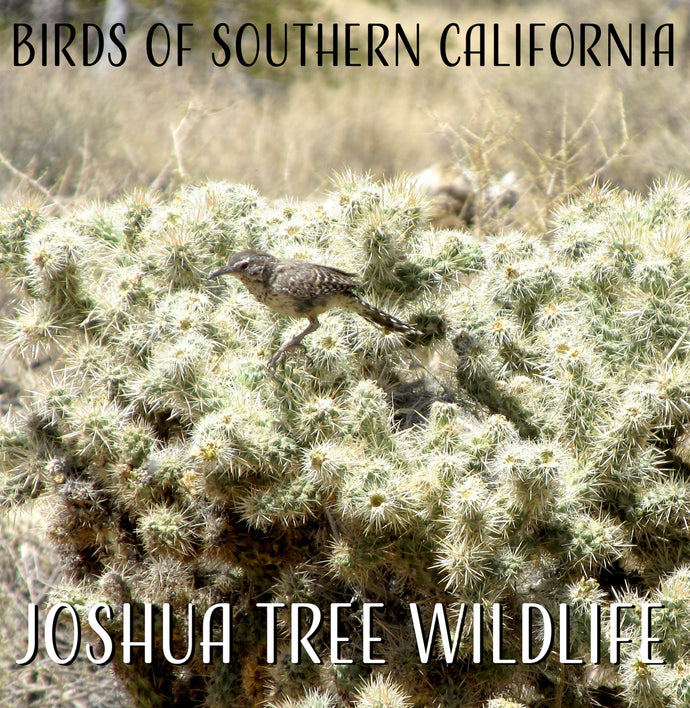 Birds of Southern California:  Joshua Tree Edition!