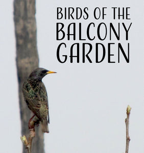 Birds of the Balcony Garden