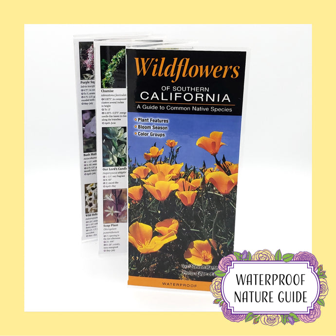 Wildflowers of Southern California: A Guide to Common Native Species