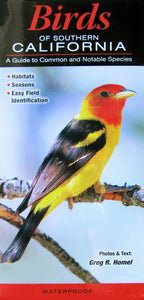 Birds of Southern California: A Guide to Common and Notable Species