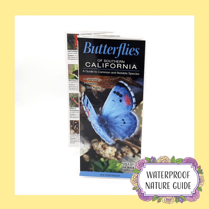 Butterflies of Southern California: A Guide to Common and Notable Species