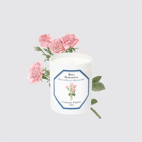 Carriere Freres Damask Rose Candle
