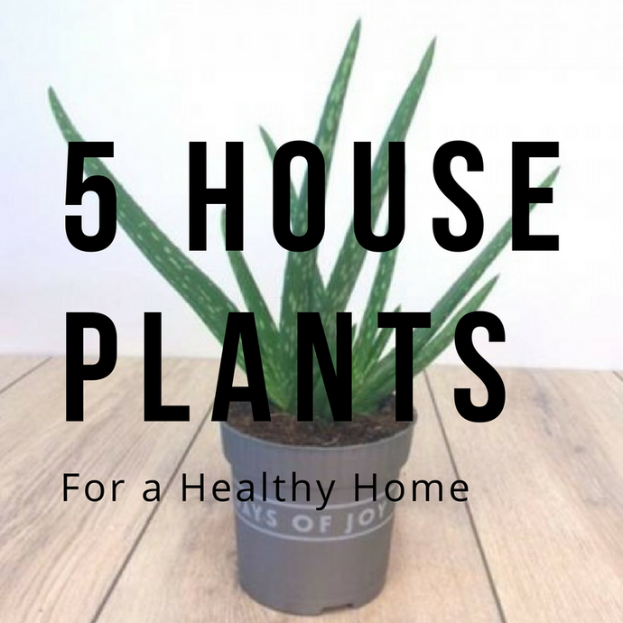 5 Plants for a Healthy Home