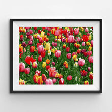Painting of bright red and yellow tulips