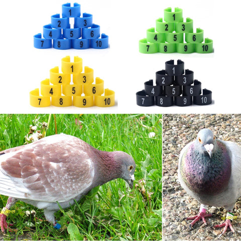 100Pcs 10mm 1-100 Numbered Poultry Leg Bands Bird Foot Ring Pigeon Pet Product 4 Colors