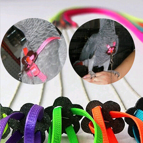 High quality Random Color Great Parrot Bird Harness & Leash Adjustable Light Soft .