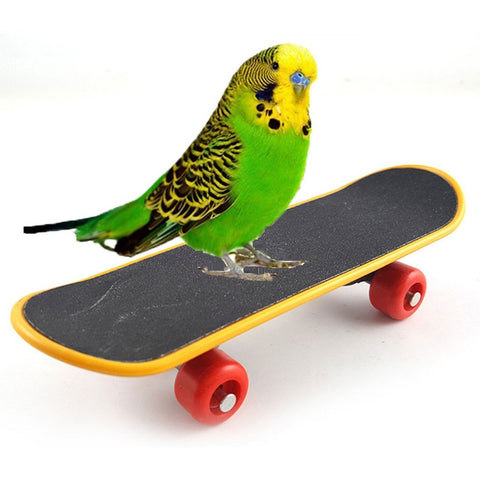 Parrot Toy Bird Intelligence Training Funny Mini Skateboard Toys 2PC/Package .