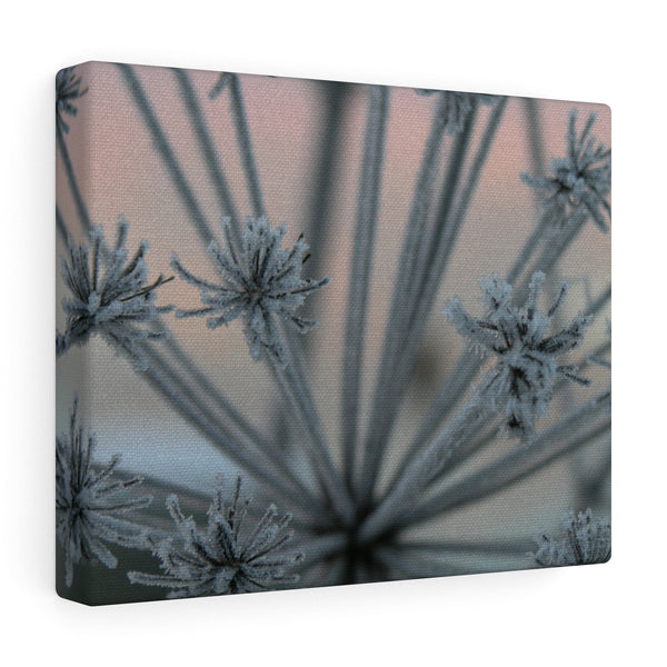 Frosty Plant - Canvas Wrap