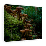 Mushrooms  - Canvas Wrap