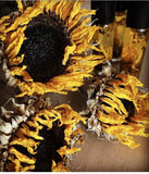 Sunflower Perfume Oil