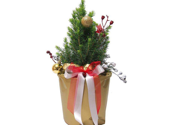 Xmas Star - Christmas Tree Free Delivery