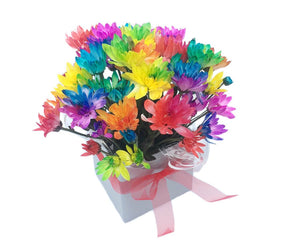 Rainbow Chrysanthemum in Box