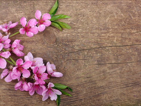 Elegant Pink Flowers Photography Wallpaper
