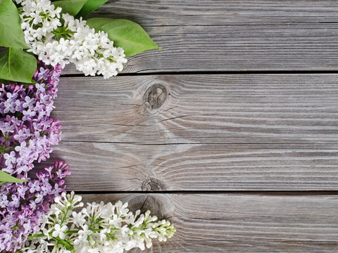 Purple & White Flowers Photography Wallpaper