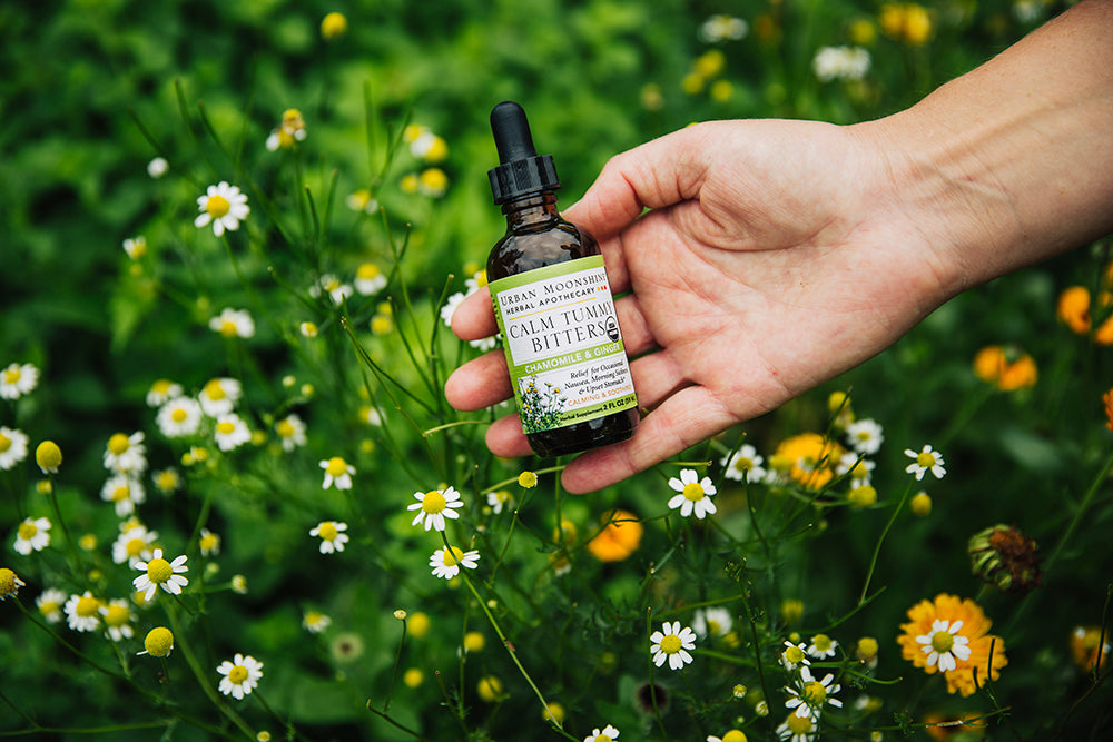 Calm Tummy Bitters in hand with chamomile