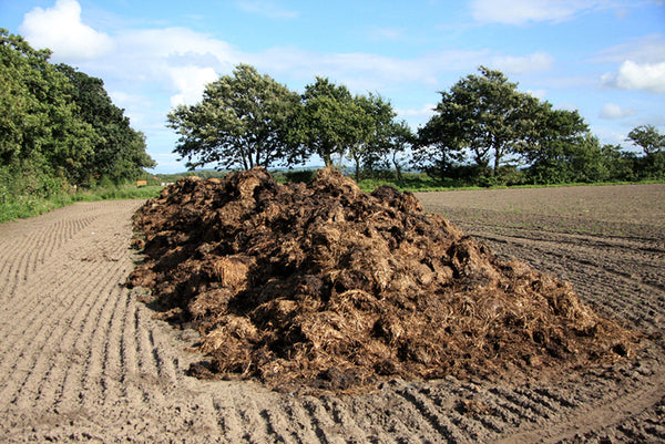 Manure in field