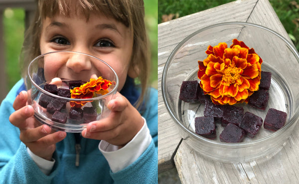 finished elderberry gummies