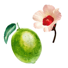 lime-hibiscus