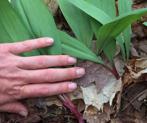 Sustainable Harvesting -- Ramps