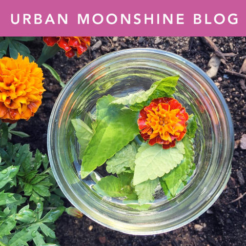 Urban Moonshine Blog