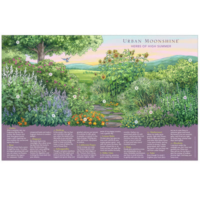 Herbs of High Summer Poster by Urban Moonshine featuring 12 herbs in a beautiful illustration of a summer herb garden in the countryside of Vermont.
